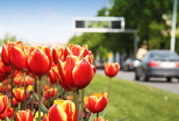 Spring Car Care