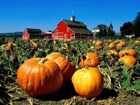 Pumpkin-Patch1.jpg